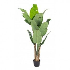 Planta banano artificial.