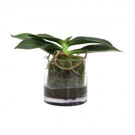 Orquídea artificial rizada.