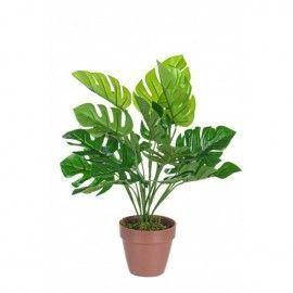 Planta filodendro con maceta.