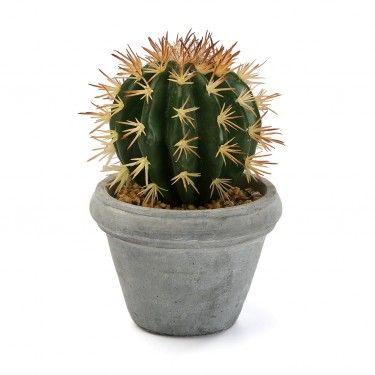 Cactus con maceta cemento.