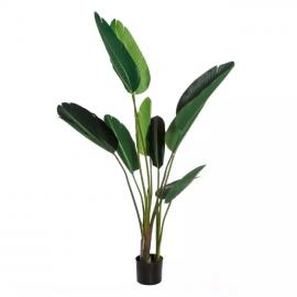 Planta ave del paraíso. 150 cm.