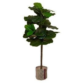 Ficus lyrata artificial.