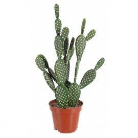 Cactus artificial.