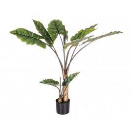 Planta Dieffenbachia 10 hojas H134