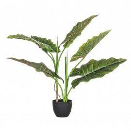 Planta Dieffenbachia con maceta 7 hojas H78