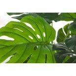Planta Filodendro 8 hojas H60CM