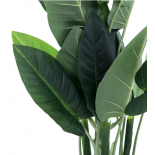 Planta hojas 50x50x94 CM
