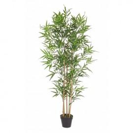 Planta de bambú. 155 cm.