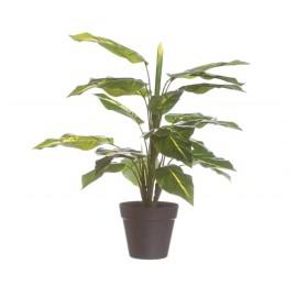 Planta Diefembaquia 45cm