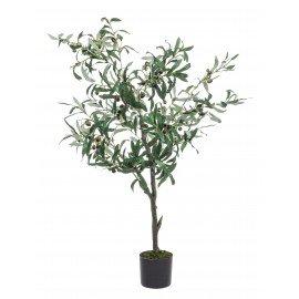 Planta Olivo con maceta h120cm
