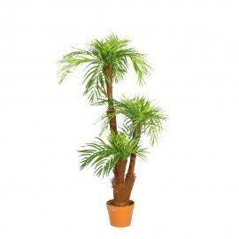Planta palmera jardín