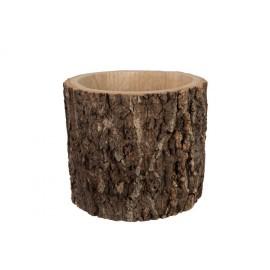 Maceta tronco árbol grande.