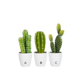 Cactus 3 modelos.